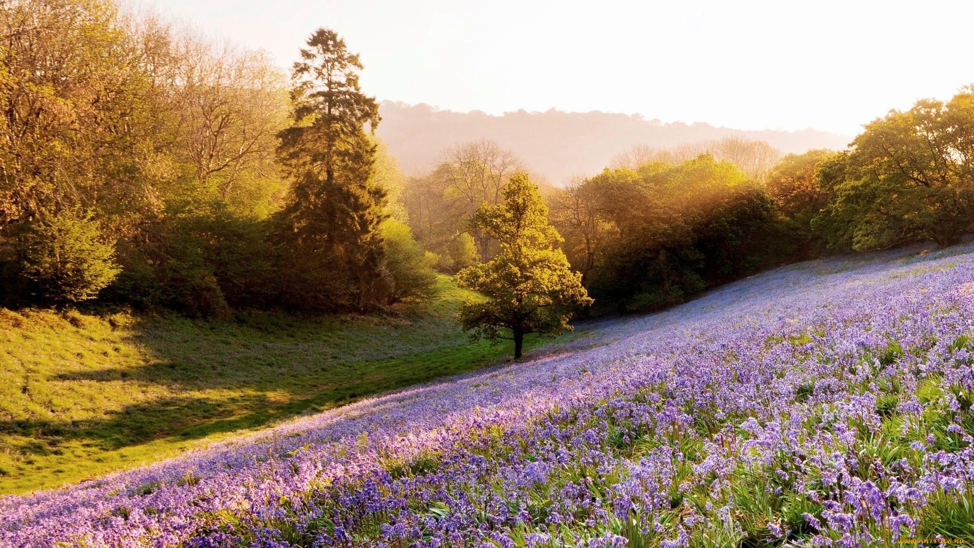 Весна лето природа фото